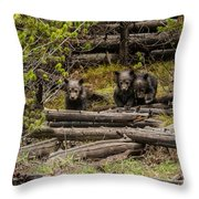 Grizzly Triplets After Rain Throw Pillow
