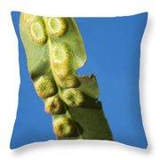 Gum Leaf Galls Throw Pillow