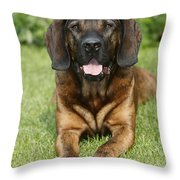 Hanover Hound Throw Pillow