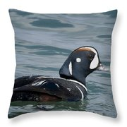 Harlequin Duck Throw Pillow
