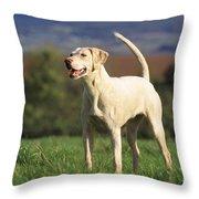 Harrier Dog Throw Pillow
