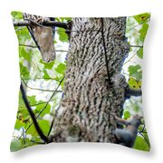 Hawk Hunting For A Squirrel On An Oak Tree Throw Pillow