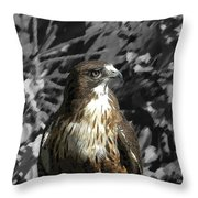 Hawk Of Prey Throw Pillow