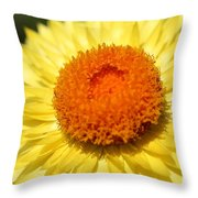 Helichrysum Bracteatum Named Strawburst Yellow Throw Pillow