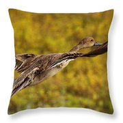Hen Northern Pintail In Flight  Throw Pillow