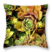 Hens And Chick Plants Throw Pillow