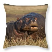 Hippo Cow And Calf Throw Pillow