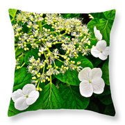 Hobblebush On Mackinac Island-michigan Throw Pillow