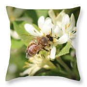 Honeybee And Honeysuckle Throw Pillow