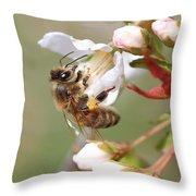 Honeybee On Cherry Blossom Throw Pillow