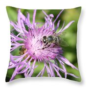 Honeybee On Ironweed Throw Pillow
