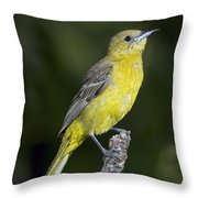 Hooded Oriole Female Throw Pillow