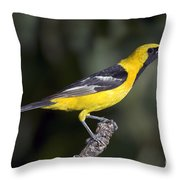 Hooded Oriole Male Throw Pillow