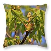 Horse Chestnut Throw Pillow
