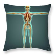 Human Body Showing Skeletal System Throw Pillow