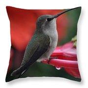 Hummingbird Anna's On Perch Throw Pillow