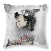 Husky Dogs Pull A Sledge  Throw Pillow