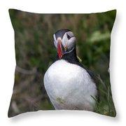 Icelandic Puffin Throw Pillow