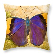 Indian Leaf Butterfly Throw Pillow