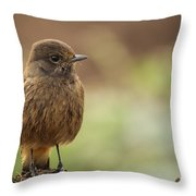 Indian Robin Female Throw Pillow