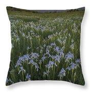 Iris Field Throw Pillow