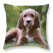 Irish Setter Puppy Throw Pillow