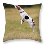 Jack Russell Jumping For Ball Throw Pillow