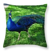 Jimmy The Peacock Throw Pillow