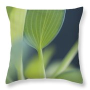 June Plantain Lily Close Ups Throw Pillow
