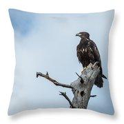 Juvenile Eagle Throw Pillow