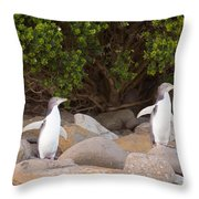 Juvenile Nz Yellow-eyed Penguins Or Hoiho On Shore Throw Pillow
