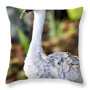 Juvenile Sandhill Crane Grus Canadensis Pratensis II Usa Throw Pillow