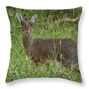 Kirks Dik-dik Throw Pillow
