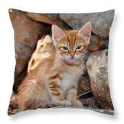 Kitten In Hydra Island Throw Pillow