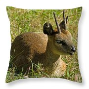 Klipspringer Antelope Throw Pillow