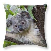 Koala Joey Australia Throw Pillow
