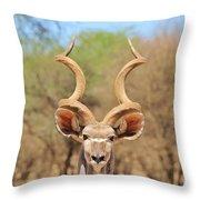 Kudu Bull Spiral Throw Pillow