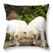 Labrador Puppies Eating Throw Pillow