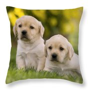 Labrador Puppies Throw Pillow
