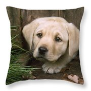 Labrador Puppy Throw Pillow