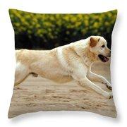 Labrador Retriever Dog Throw Pillow