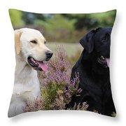 Labrador Retriever Dogs Throw Pillow