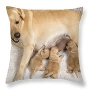 Labrador With Young Puppies Throw Pillow