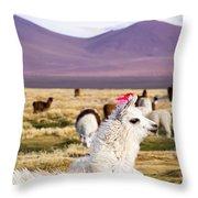 Lama On The Laguna Colorada In Bolivia Throw Pillow