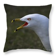 Larus Delawarensis... Throw Pillow