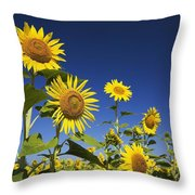 Laval, Quebec, Canada Sunflowers Throw Pillow