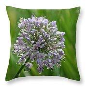 Lavender Globe Lily Throw Pillow