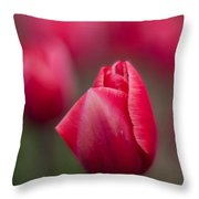 Layers Of Beauty Throw Pillow