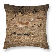 Leaping Impala Throw Pillow