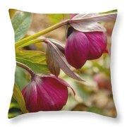Lenten Roses  Throw Pillow